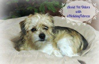 Avoid Pet Odors with #HolidayFebreze