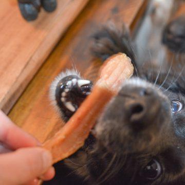 Ninja Foodi Chicken Jerky Treats for Dogs
