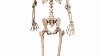 Realistic Posable Skeleton